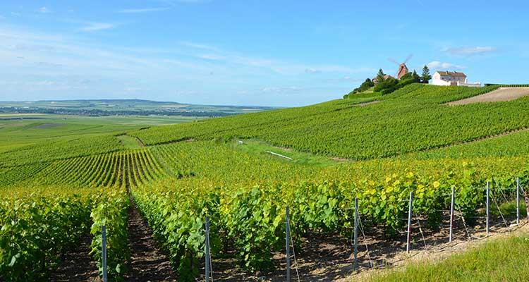 Vignobles_de_Champagne_pres_d_Ay_DSC_0267-w
